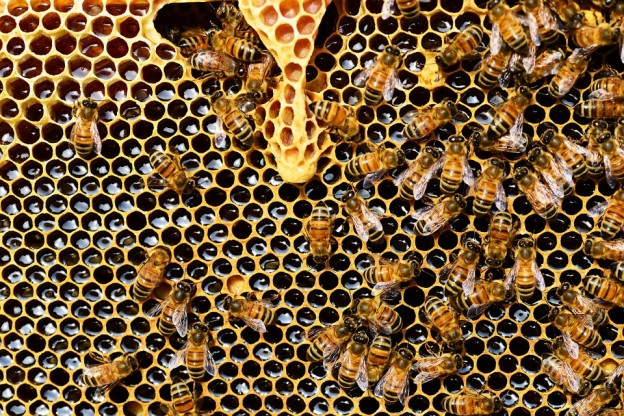 propoleo-abejas-valenciafarmacia